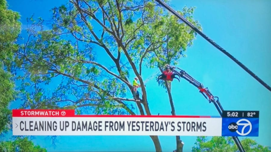 Green Vista Tree Care remote-controlled tree removal crane in action as shown on ABC 7 Virginia
