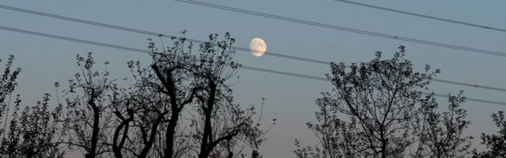 silhouette of trees in power lines with moon in background