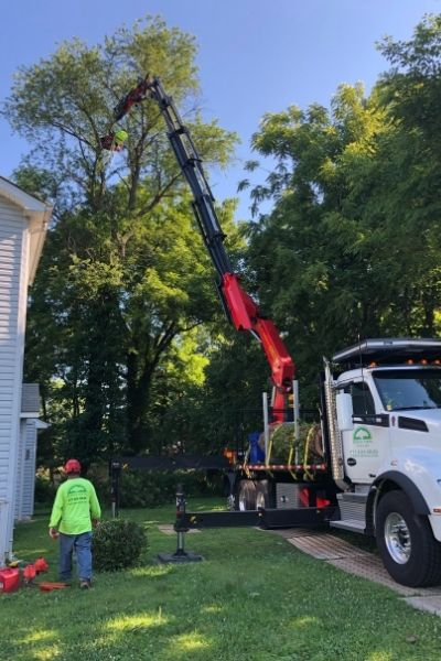 Green Vista's remote-controlled crane in use for a tree removal