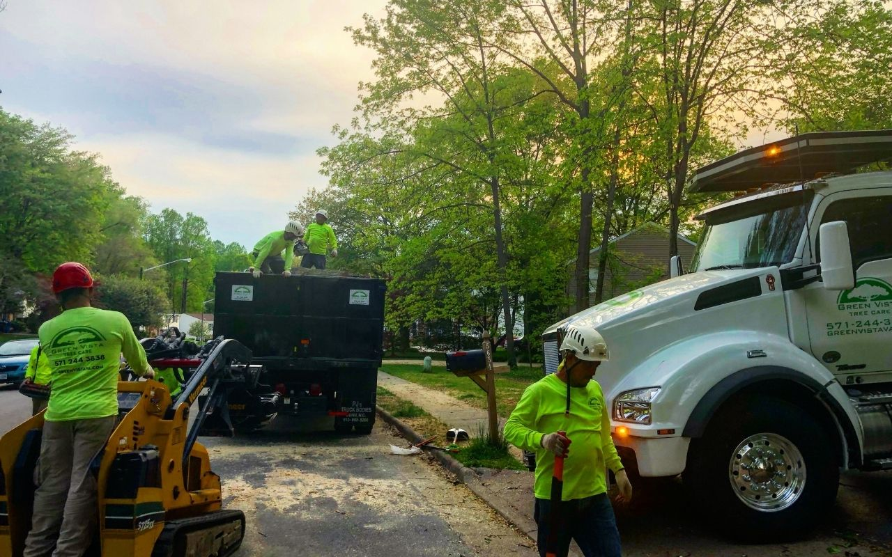 Green Vista ground crew working during a tree removal