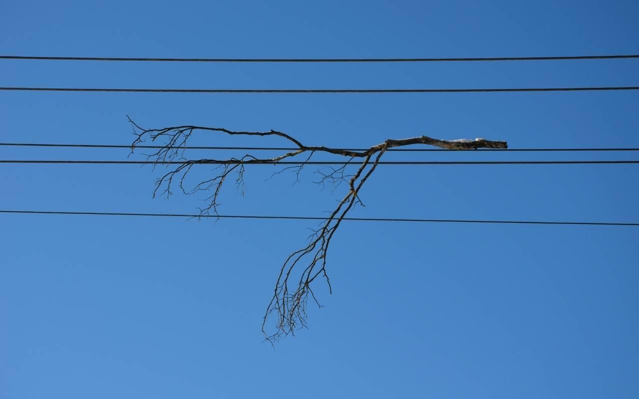 broken branch hanging up in overhead power lines